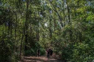 Parque Arboretum Lussich em Punta del Este: trilha
