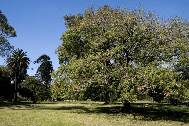 Parques em Montevidéu: Parque Batlle