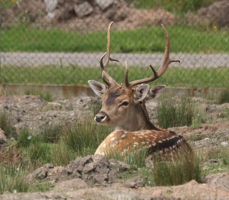 Zoo Parque Medina: animais