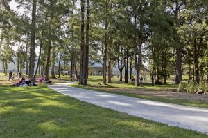 Parque El Jaguel em Punta del Este: informações