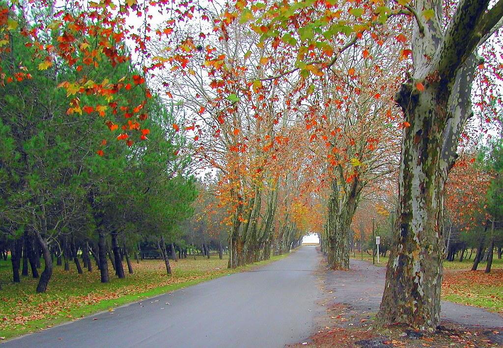 Carmelo no Uruguai: árvores