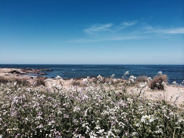 Clima em Punta del Este: Primavera