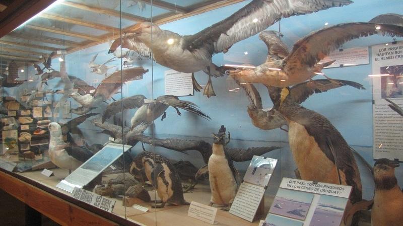 Melhores museus no Uruguai: Museo del Mar em La Barra